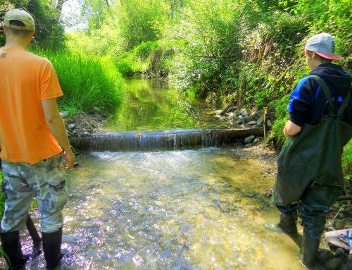 Kaskády – Mlynský potok