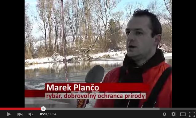 kormorany_video_planco